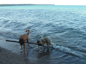 Dogs are not allowed to be off-leash at Miwaukee County Parks, or beaches.